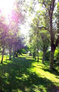 viale alberato a villa sant'ignazio